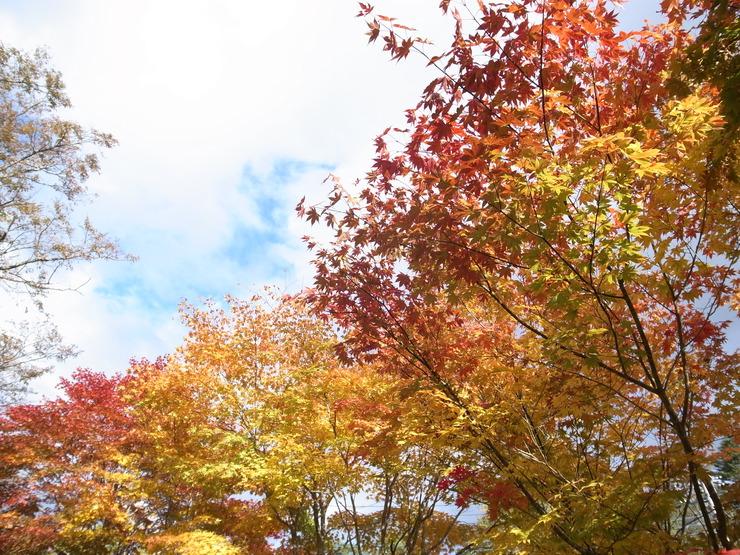 軽井沢紅葉まつり