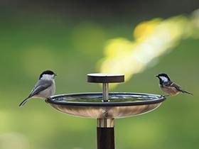 hosino_birdre.jpg