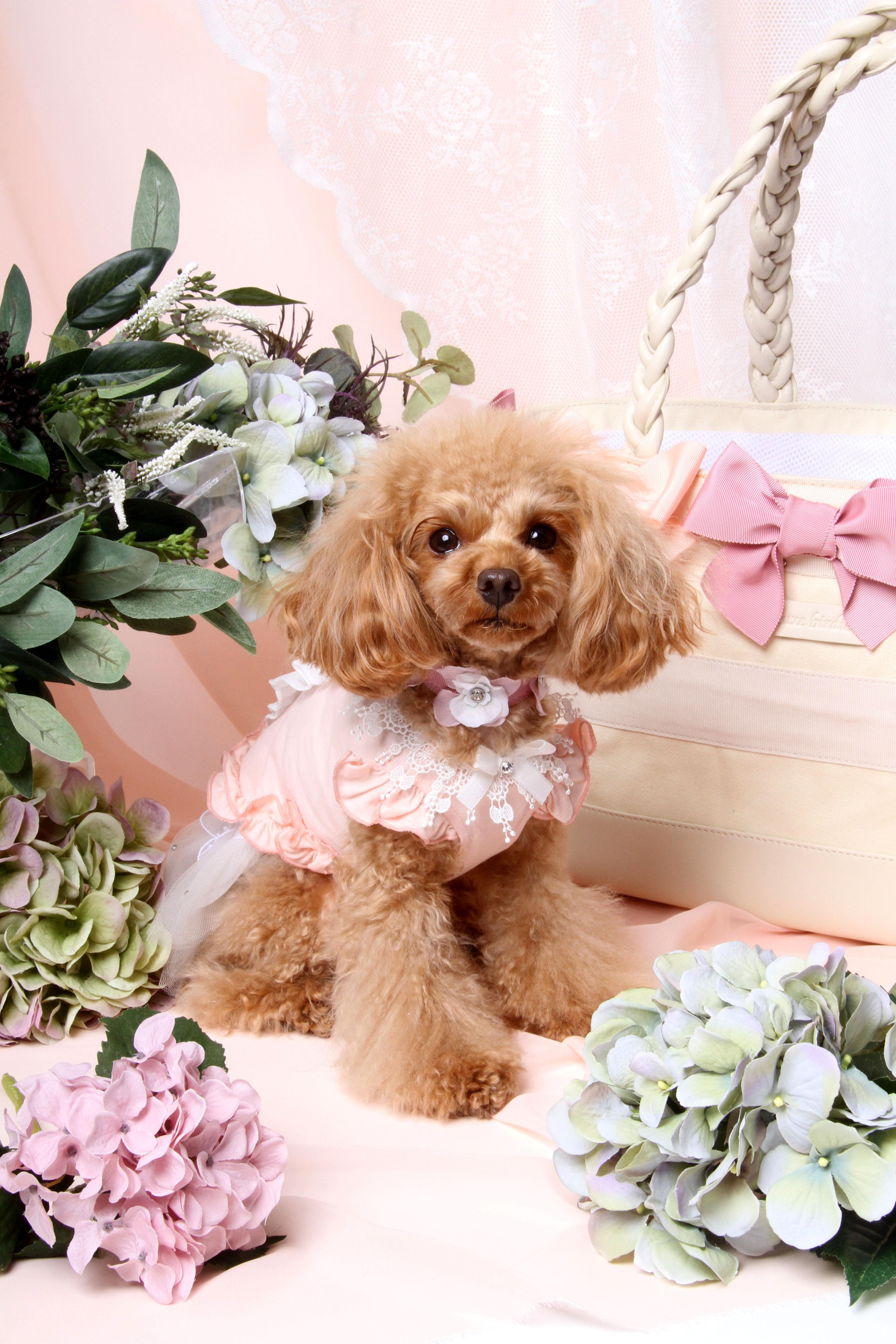 KARIUIZAWA BIRDIE DOG Lover`s shop+CAT